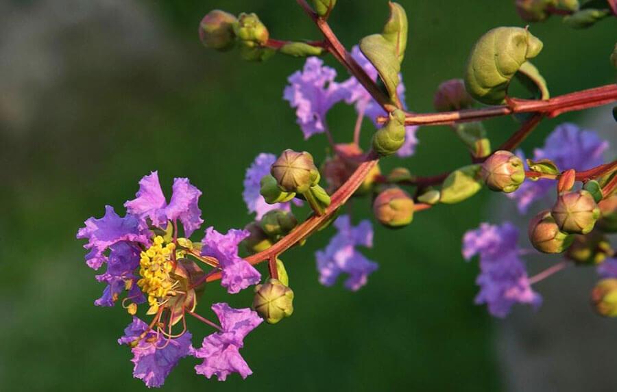 Tên tiếng Trung hay theo ý nghĩa các loài hoa