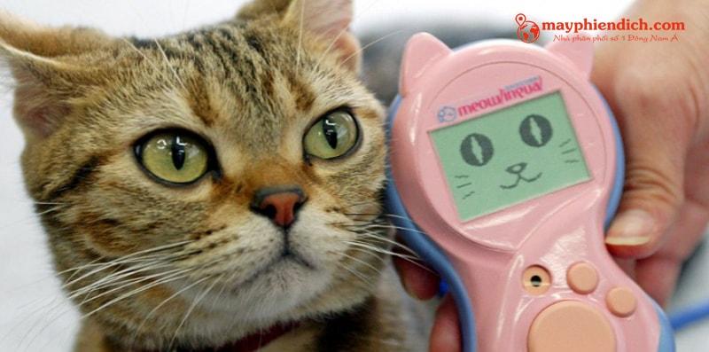 Máy phiên dịch tiếng mèo takara